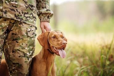Jak zgłosić psa do udziału w konkursie bądź próbach pracy psów myśliwskich?